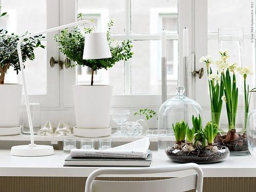 11jpeg - Office Plants